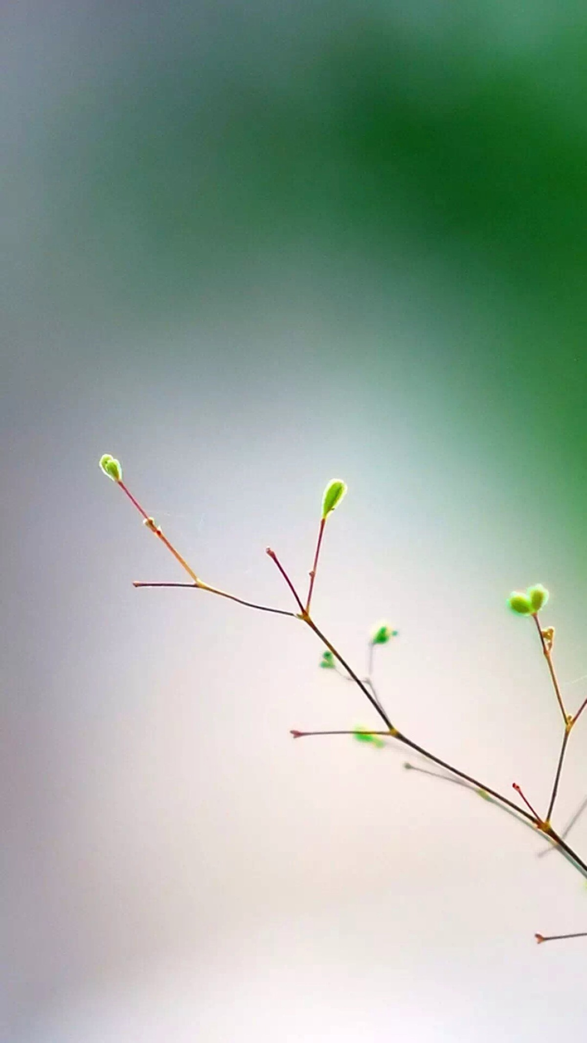 人生最好的境界 是丰富的安静