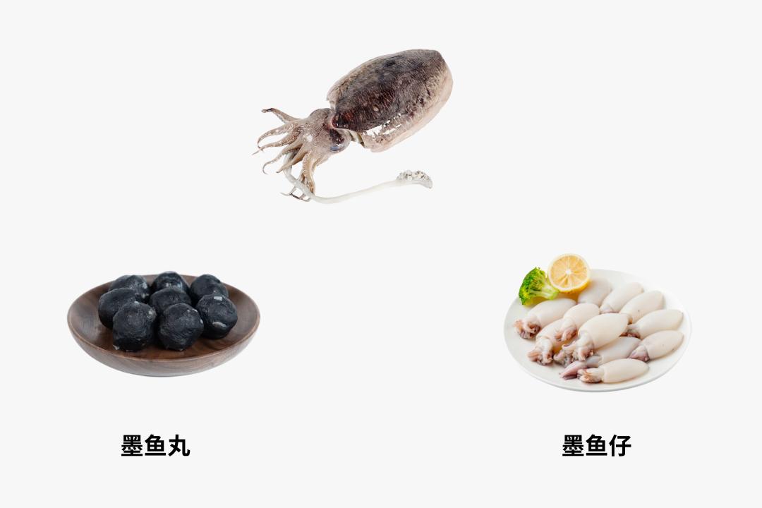 鱿鱼、章鱼、墨鱼傻傻分不清楚?看完这篇全明白了