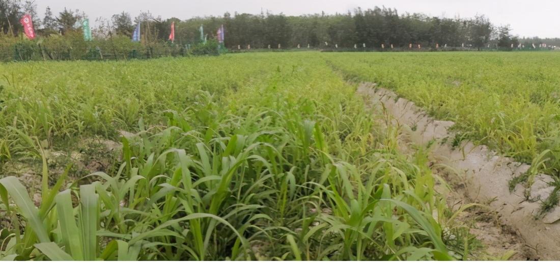华联农业守护国人食品安全 开启生态功能性农业新时代