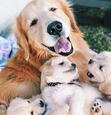 这6件事是狗狗一生的心愿,主人满足它了吗?