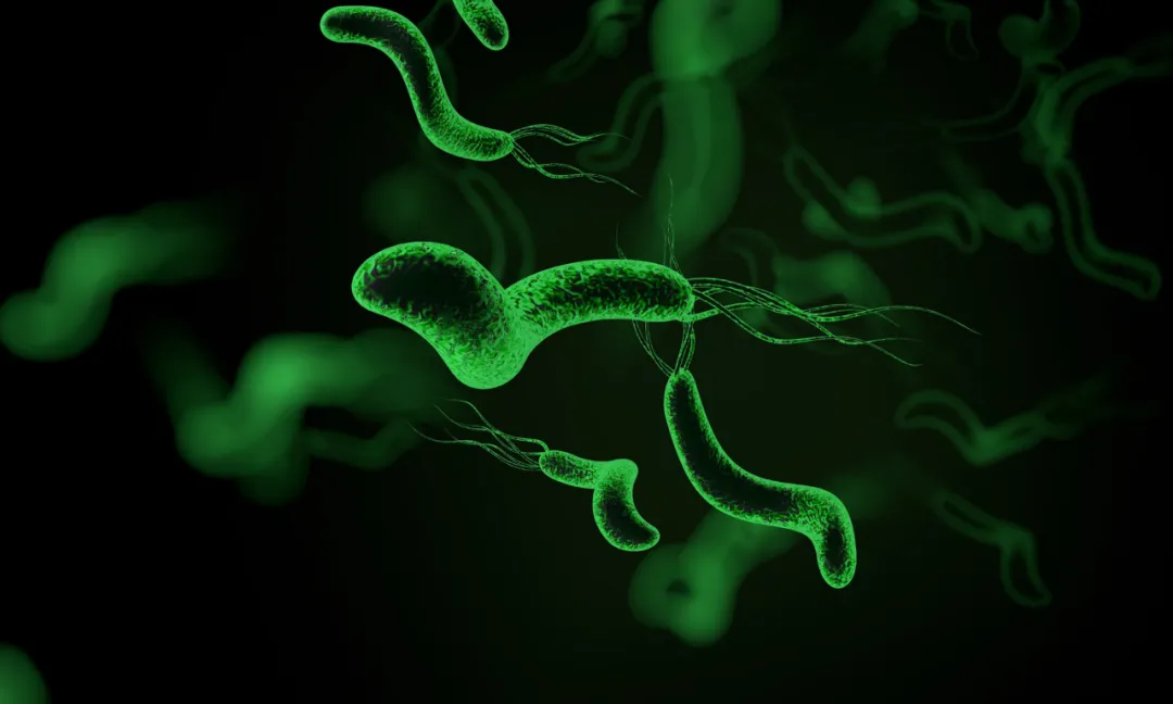 幽门螺旋杆菌,根除它并不难