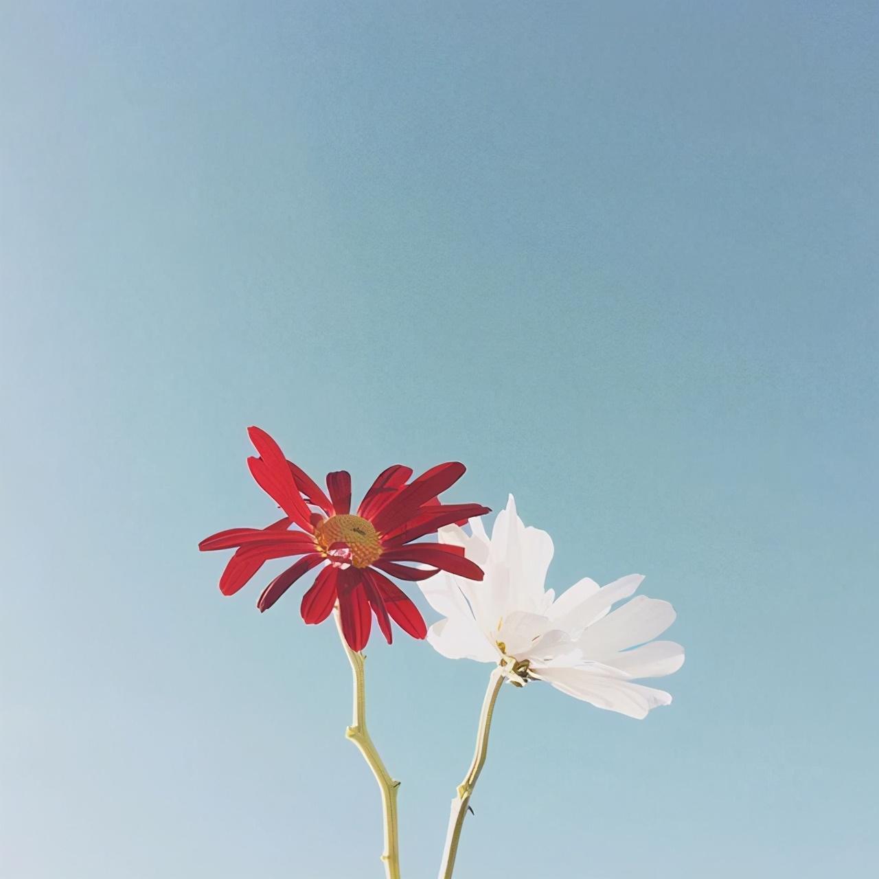 早安语录适合发朋友圈早安的句子,愿你心向阳光