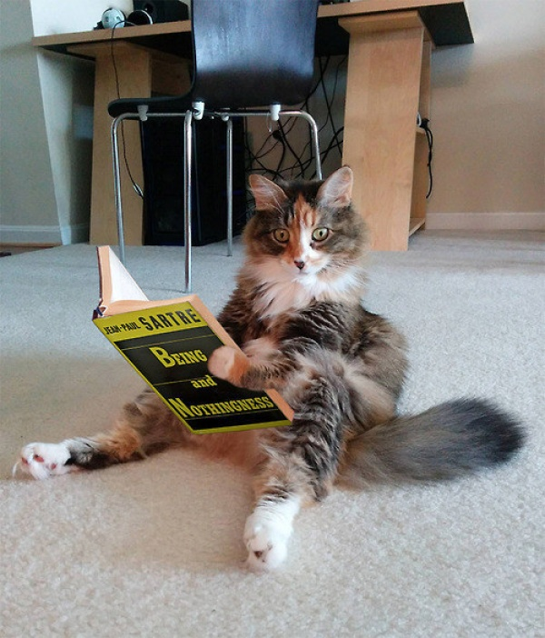25張貓咪搞笑圖片:那些不想養貓的人,你們是還不知道貓有多可愛