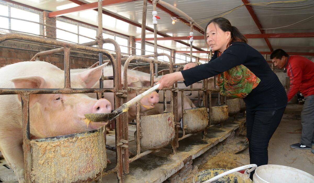 """五一假期""""失效""""!猪价阴跌不止,养殖户压栏压了个""""寂寞""""?"""