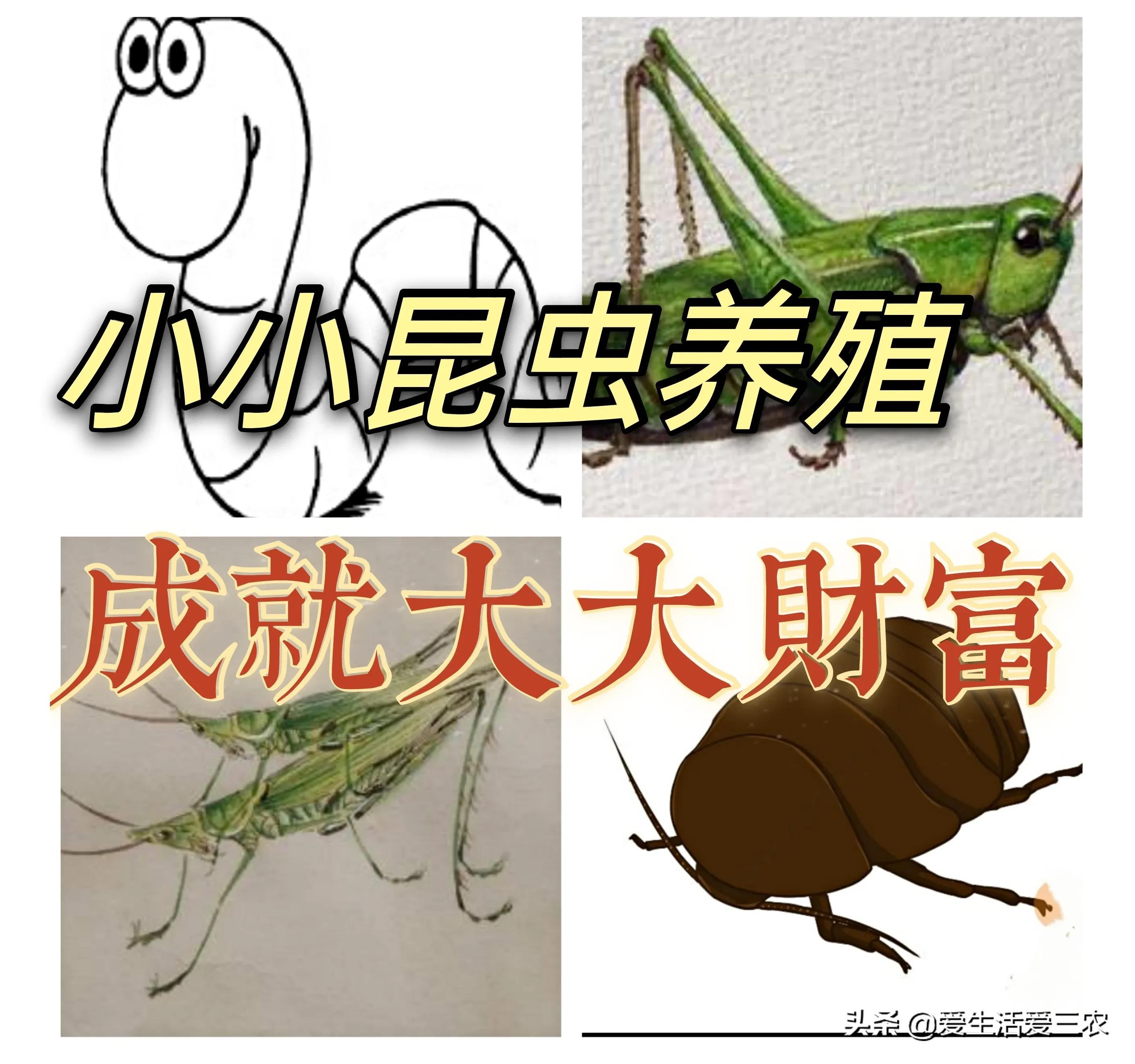 农村4大冷门养殖——养小虫,挣大钱!