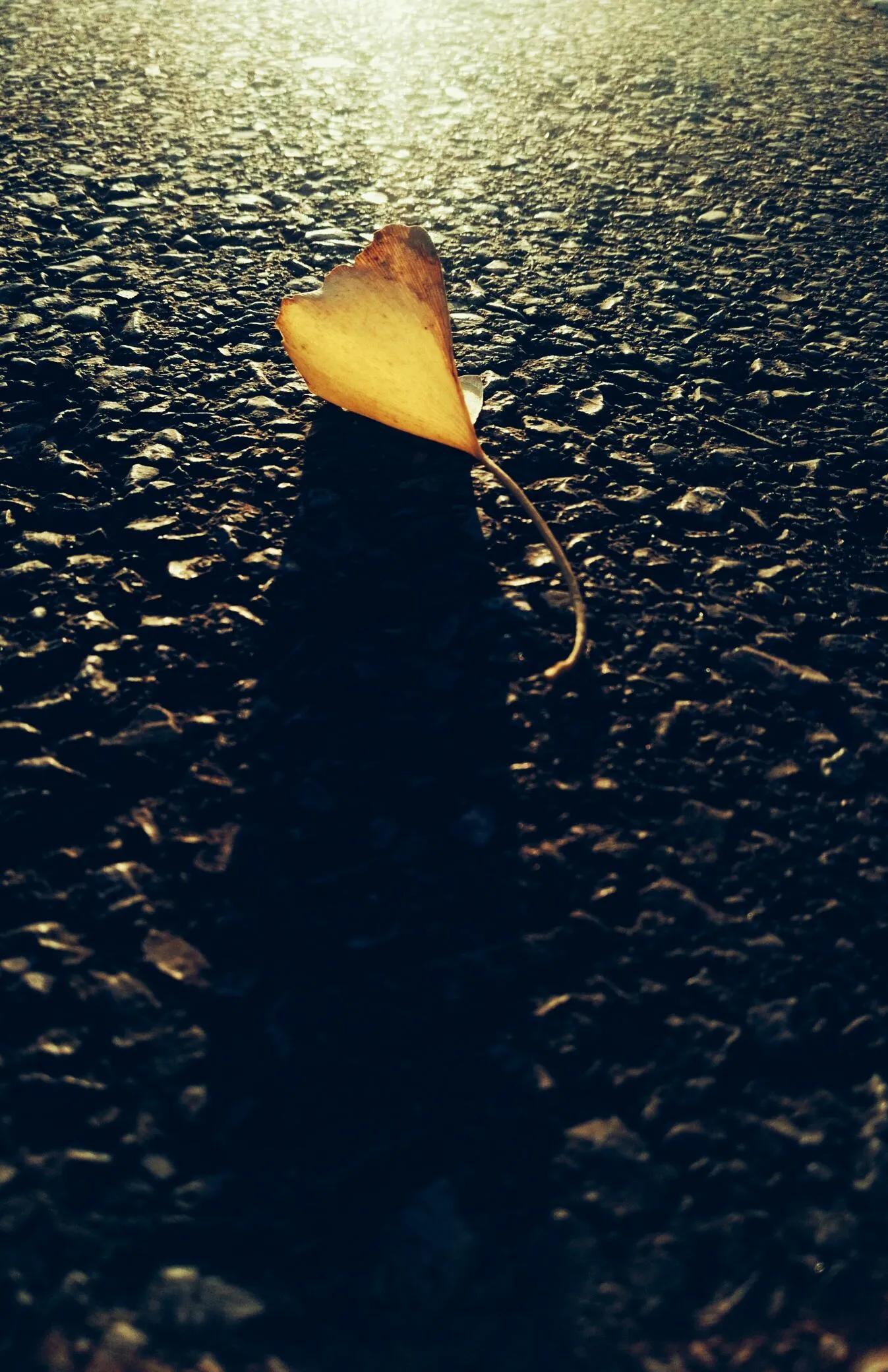散文:靜賞初冬,聆聽、感悟,不一樣的景象