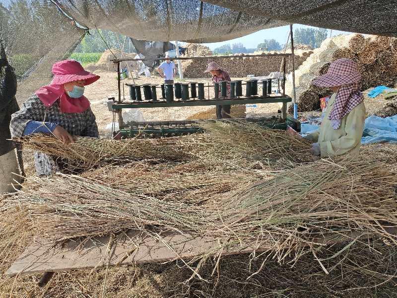 摄影师用镜头记录稻草帘、草绳制作全过程