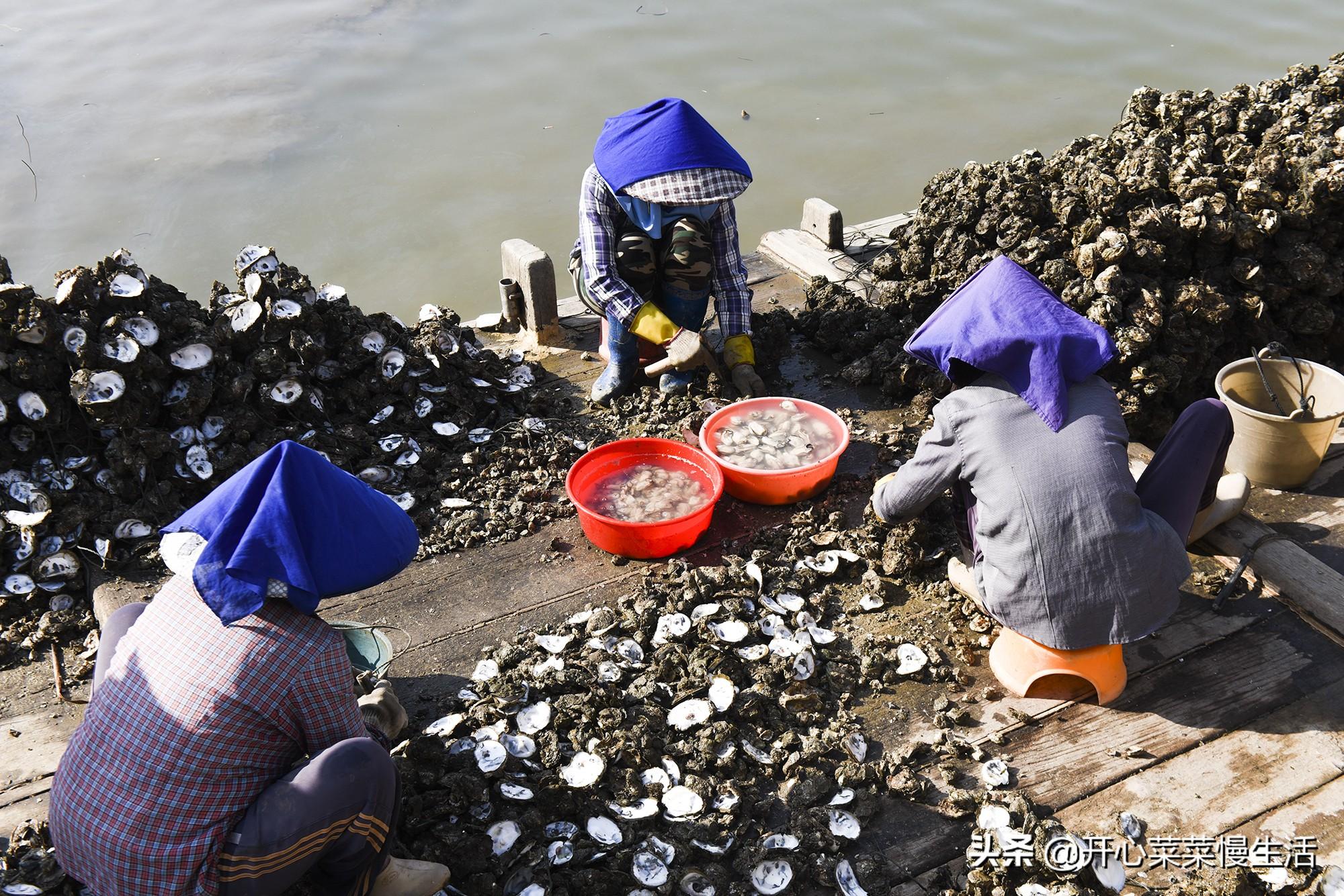 广东知名生蚝网红村,年产值达到10多亿,有人却为它感到可惜?