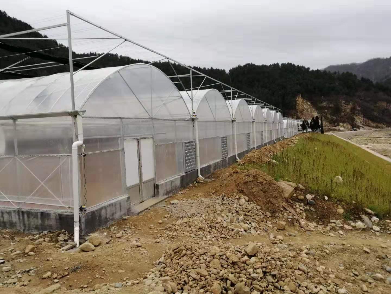 造价经济还漂亮的薄膜连栋温室大棚该如何建造?连栋温室造价