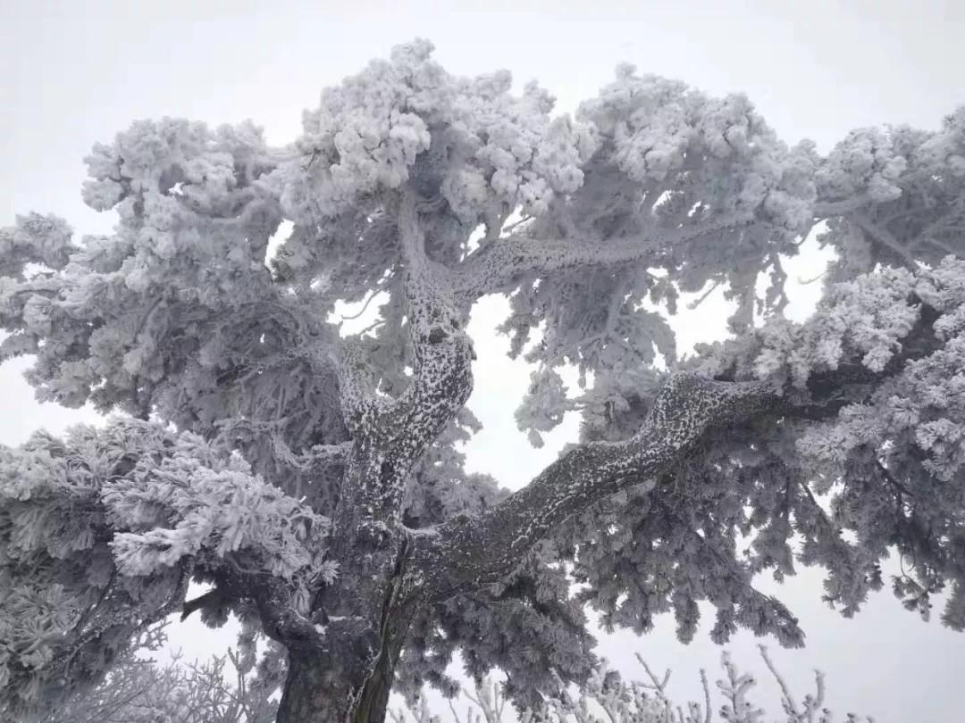 雪景到底哪家强?华山进入雪景模式,一大波美景正来袭......