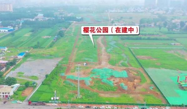 神秘!平顶山新建网红13万平方米樱花林,你知道在哪吗|城市手记