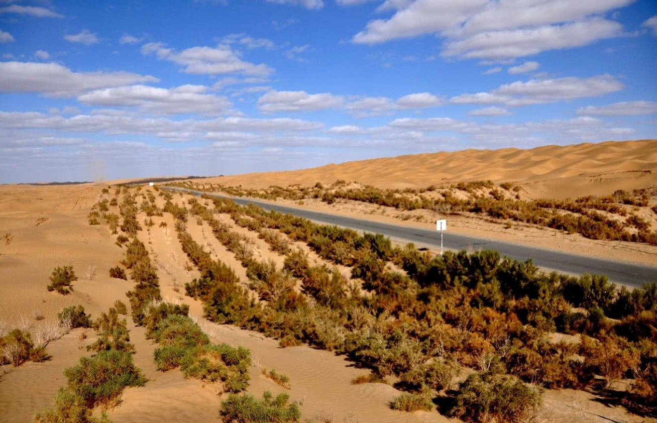 如果地球所有沙漠都變成森林會怎樣?科學家:代價恐怕難以承受