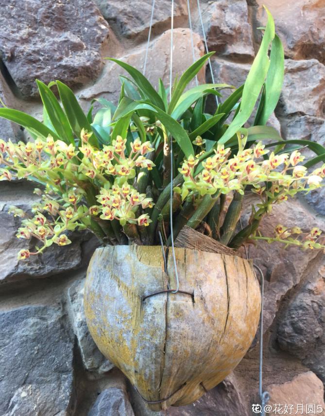 10个养花常识,杜绝黄叶落叶,花儿蹭蹭长 家务卫生 第9张