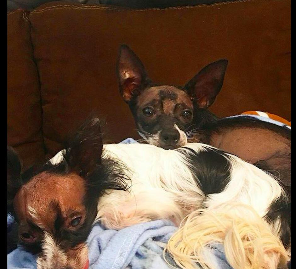 狗狗天生秃顶长相太丑,三个月大就被主人遗弃,长时间没人领养