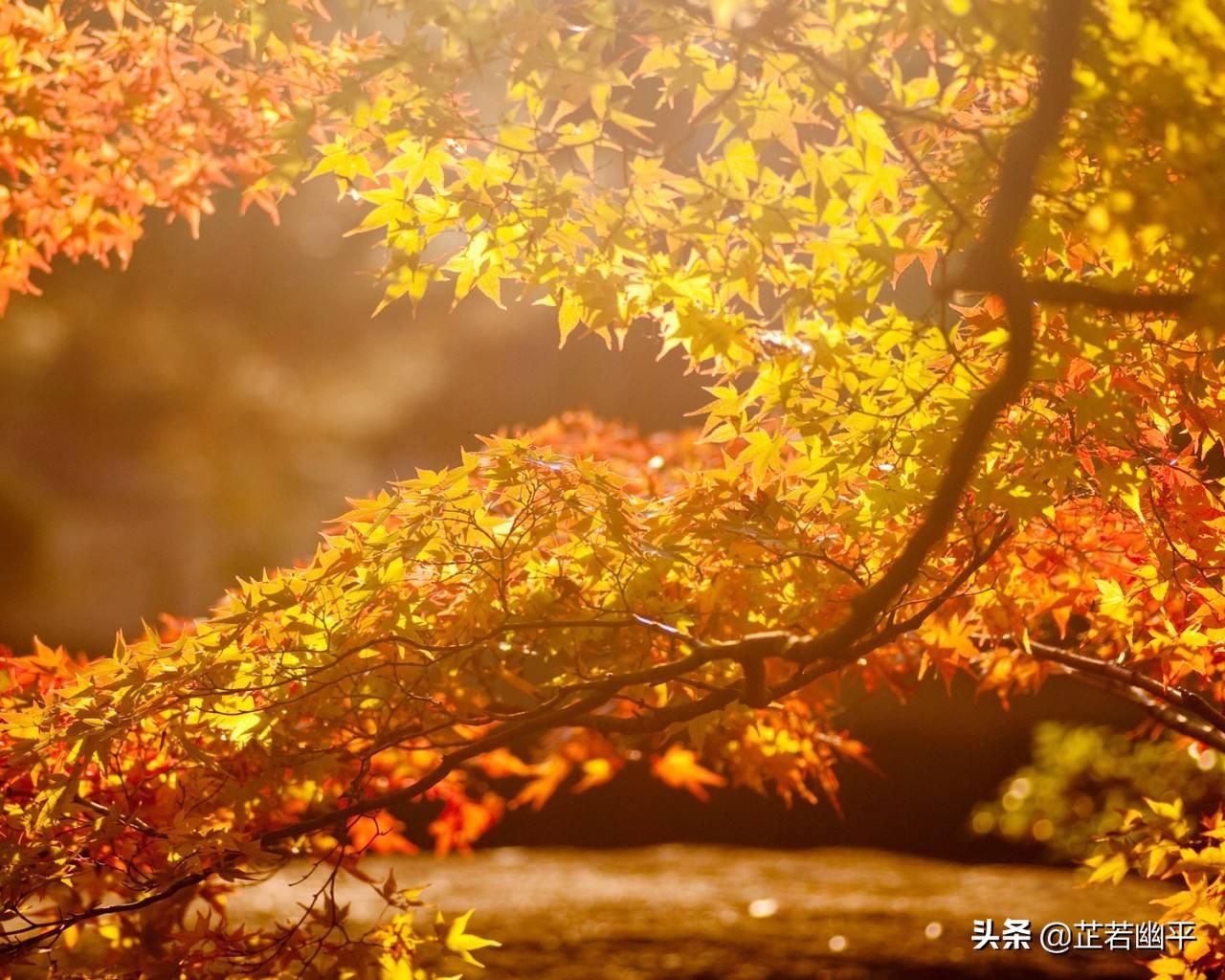 寒露 | 秋深岁月浸,露冷风霜凝