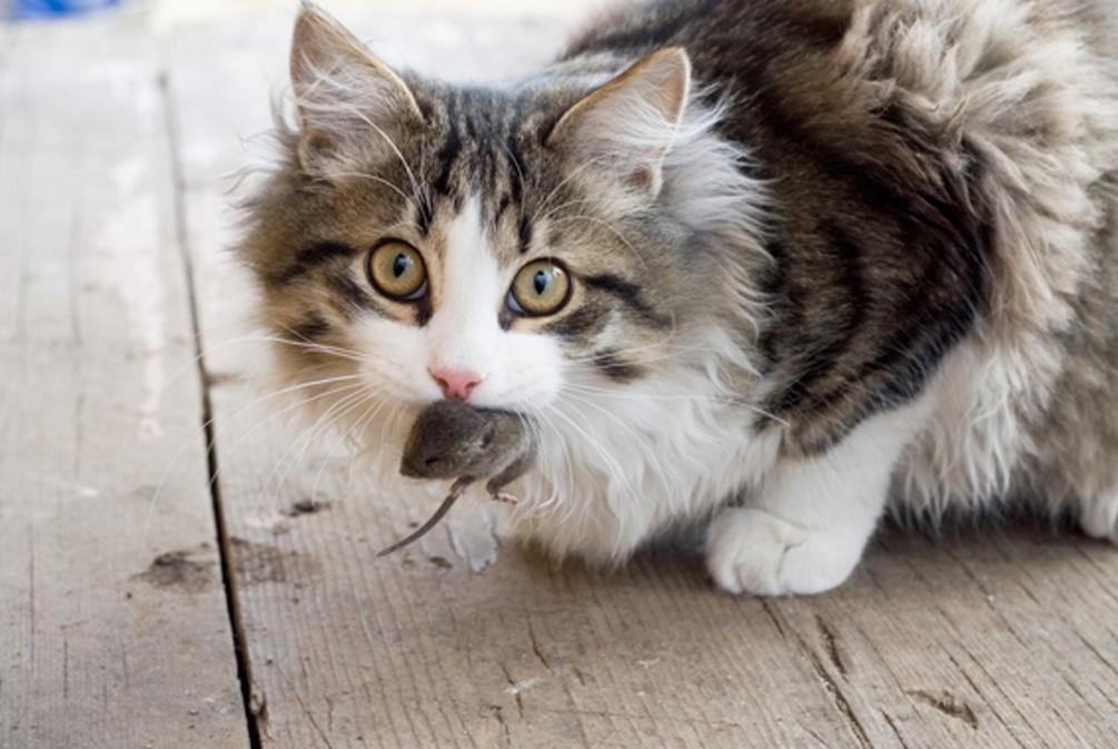 你的猫真的爱你吗?这些微小的动作帮你辨别猫咪的真实意图