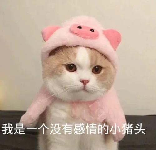 雕表情包 我是一个没有感情的小猪头