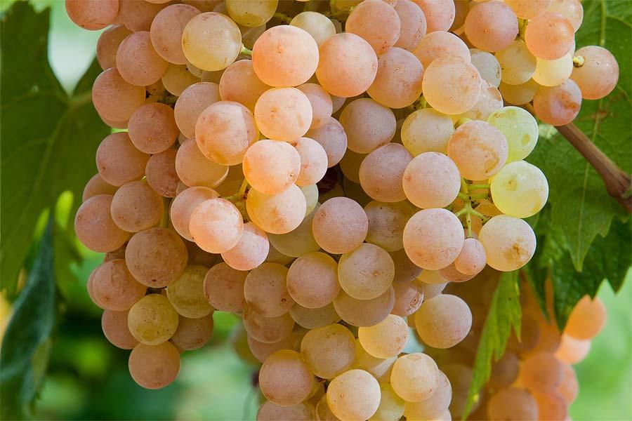 来杯清新脆爽的意大利白葡萄酒吧