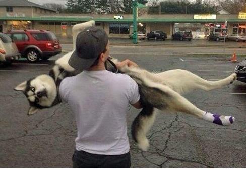 抱狗姿势讲究多,这五大禁忌不要犯,太伤狗了