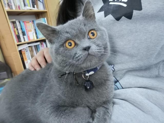 为何大家都爱云养猫?简单不累还能抚平寂寞