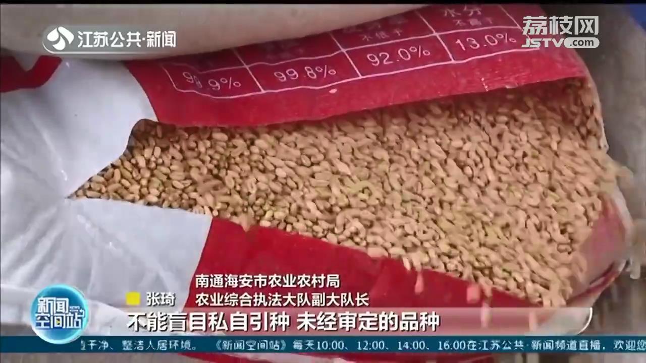 南通一家庭农场非法生产种子被责令改正:该品种不宜在当地种植