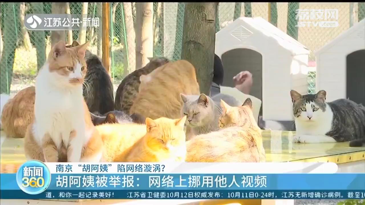 """靠好心人帮助,多年坚持喂养流浪猫 南京""""胡阿姨""""回应网络漩涡"""