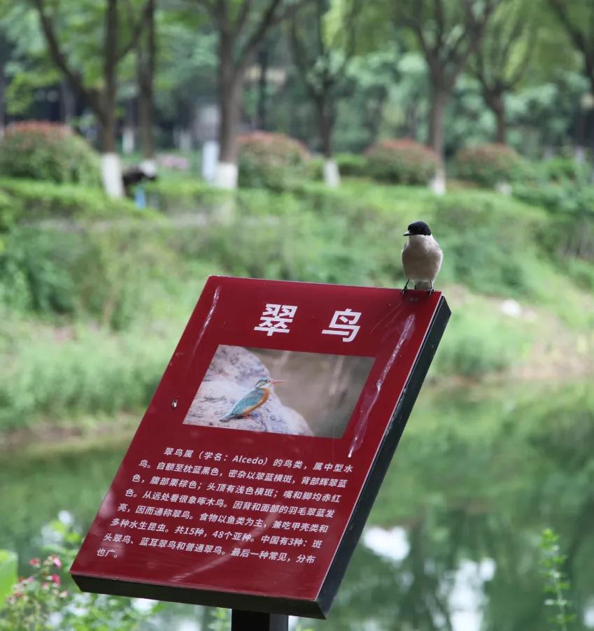 金银湖,鸟语花香生态美
