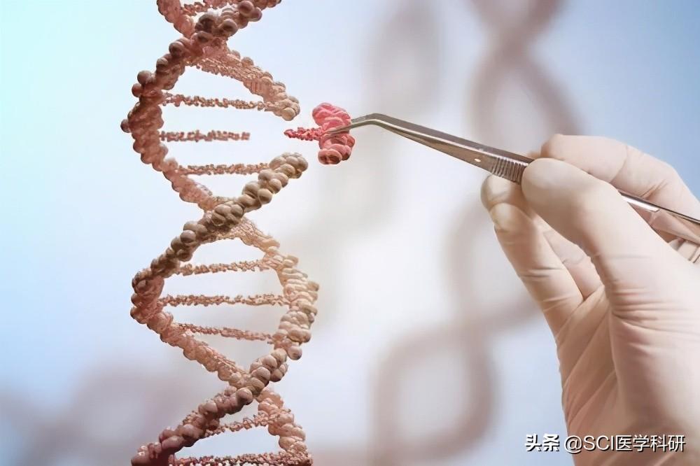 Nature观点文章:美国启动人类体细胞基因组编辑计划