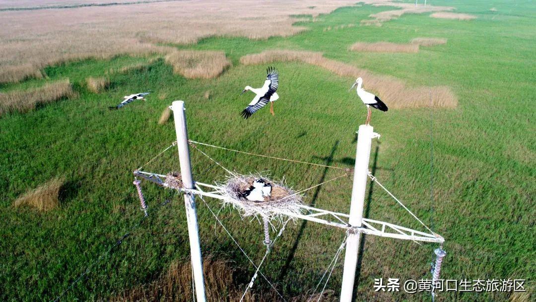 【黄河口生态旅游区】聊城老乡,欢迎您!