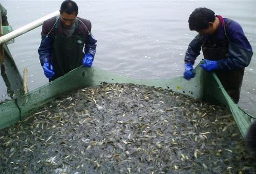 养泥鳅的利润与成本( 新型泥鳅养殖基地)