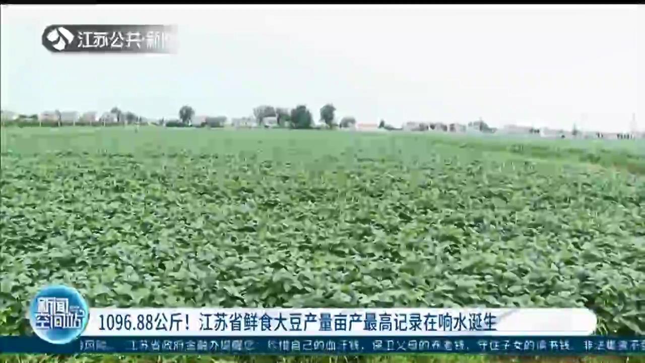 1096.88公斤!江苏省鲜食大豆产量亩产最高记录在响水诞生
