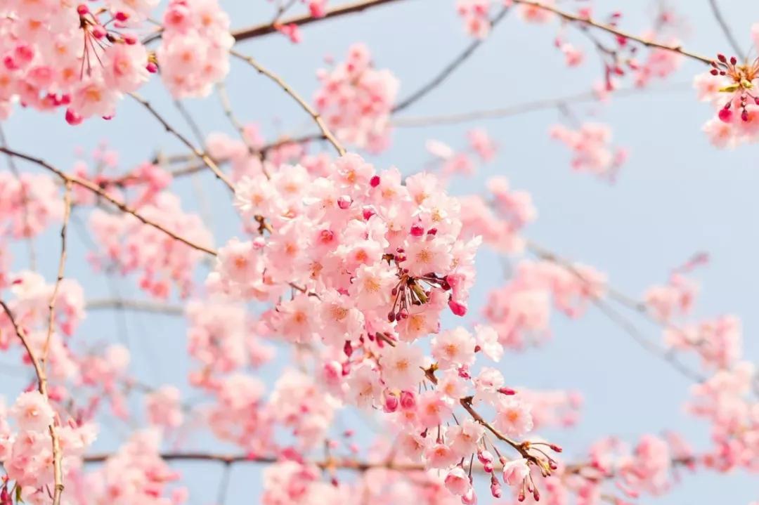 春季养生正当时,这份养生指南请收好 春季养生 第1张