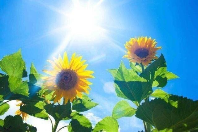早上满满正能量的说说,积极阳光,值得收藏 - 老谭创业网