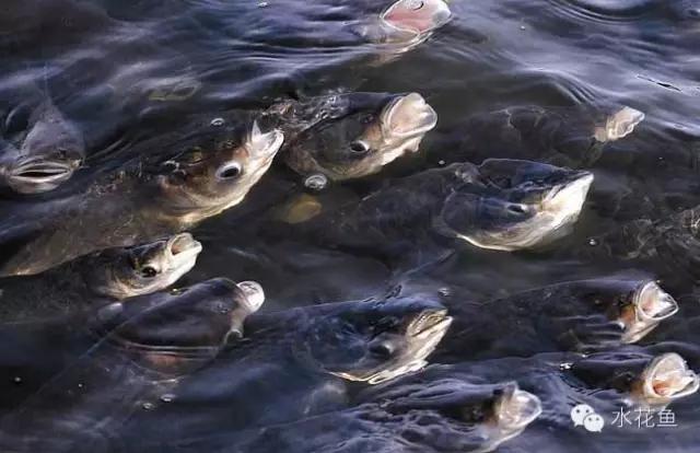 水体不缺氧,不能就说池塘就是正常的