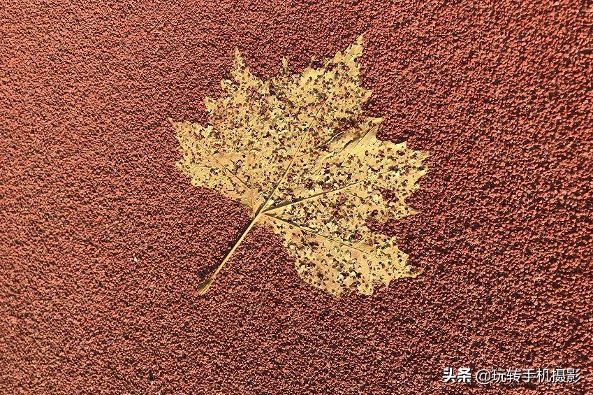 秋天这样拍美如画,你必看的实用攻略