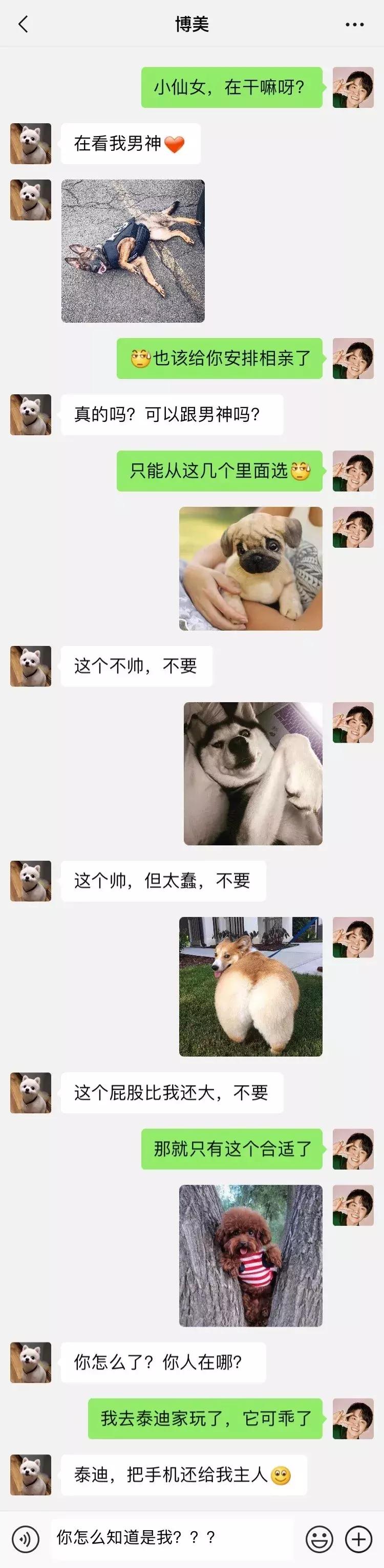 笑屎了!這些狗狗的聊天記錄,承包了我一周的笑點