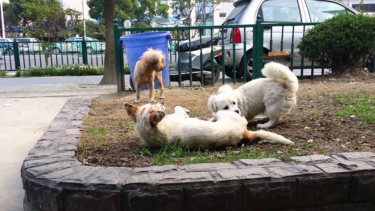 母狗生理期怎麽護理?用生理褲解決發情煩惱,防止被公狗侵犯