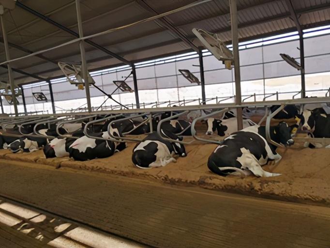 环保防疫又增效,轻松节省500万,推动奶业高质量发展