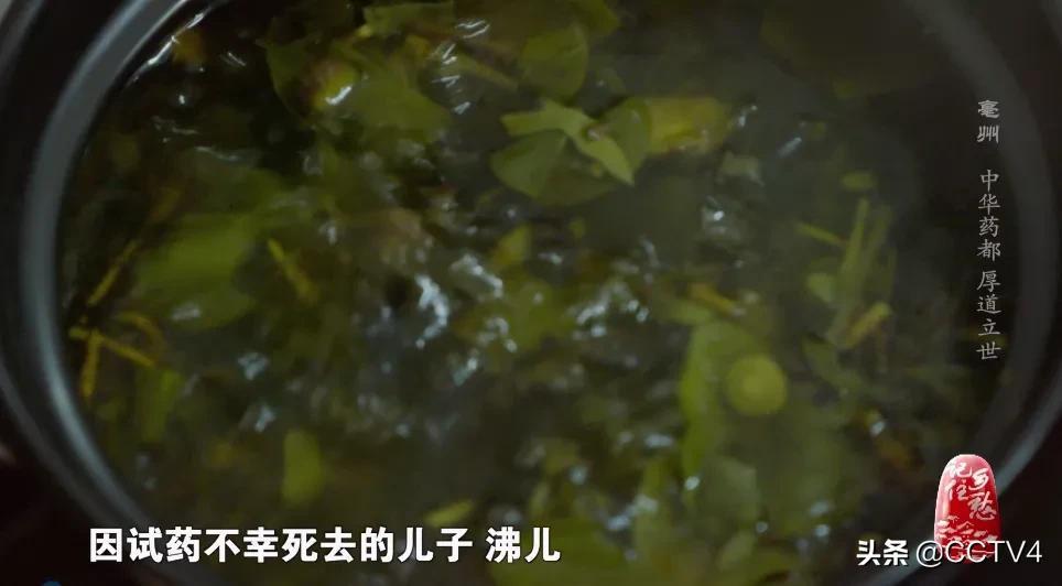 这里是华佗故里,这里被称作中华药都,虽名亳(bó)州,却异常厚道