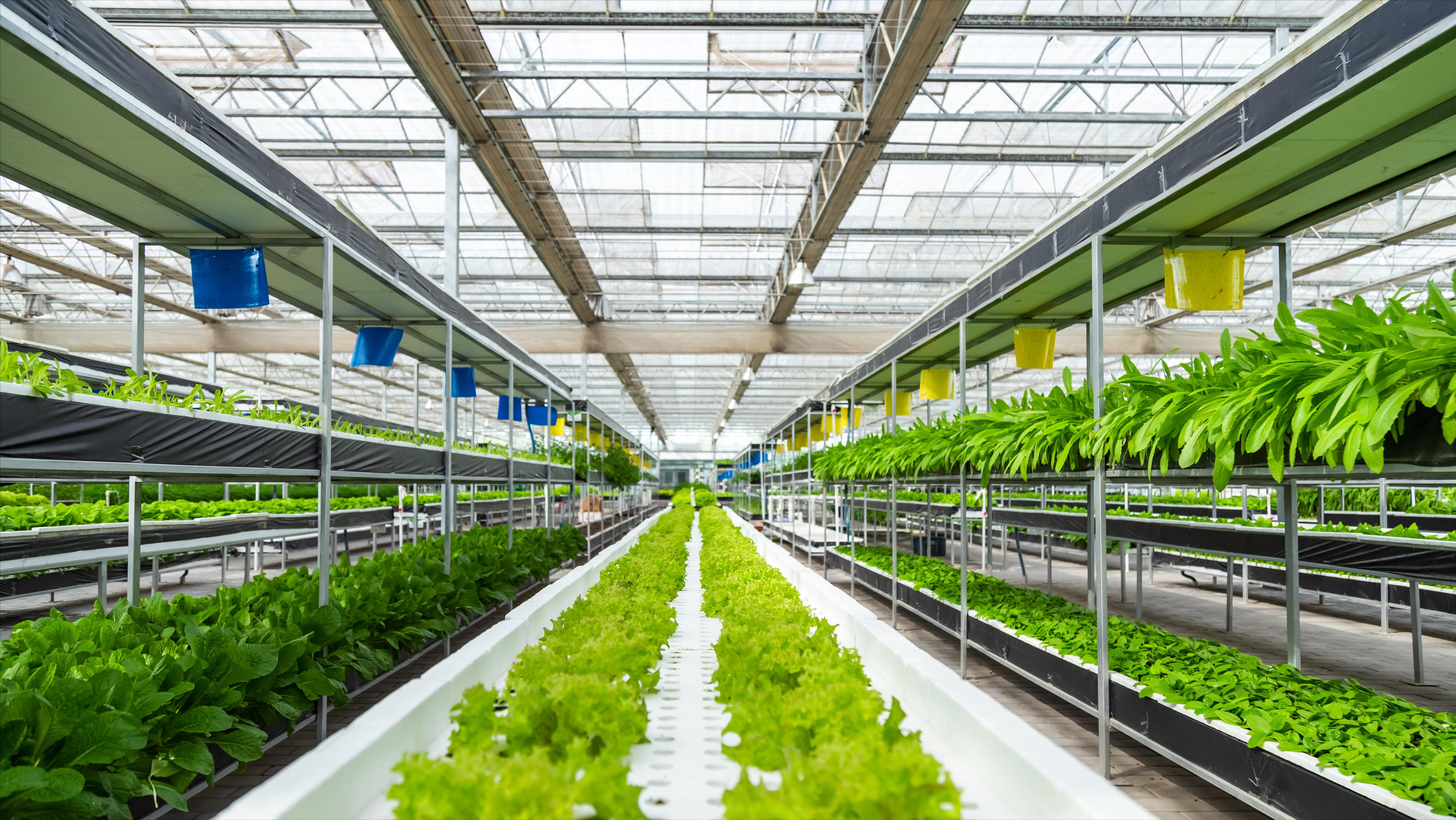 智能温室是如何为高品质作物生产保驾护航的