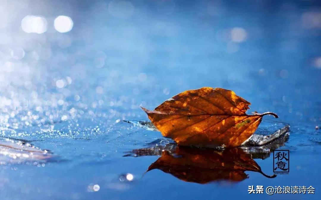 37首律诗写尽秋天之美,心若清凉,风自怡人,感悟人生大境界-第11张图片-诗句网