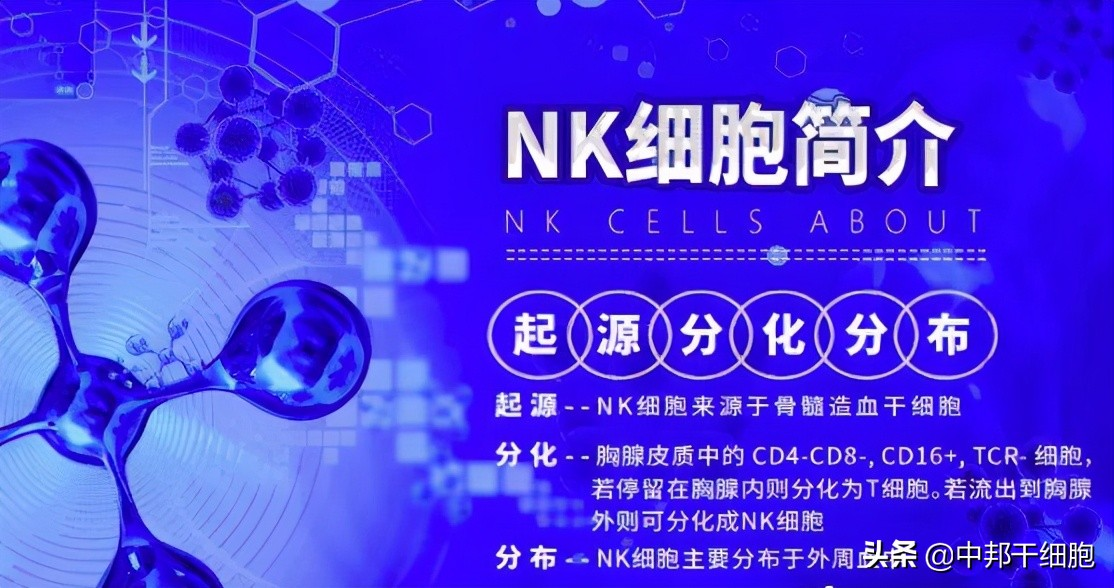 "NK细胞免疫疗法将成为未来肝癌治疗方法的""主力军"""