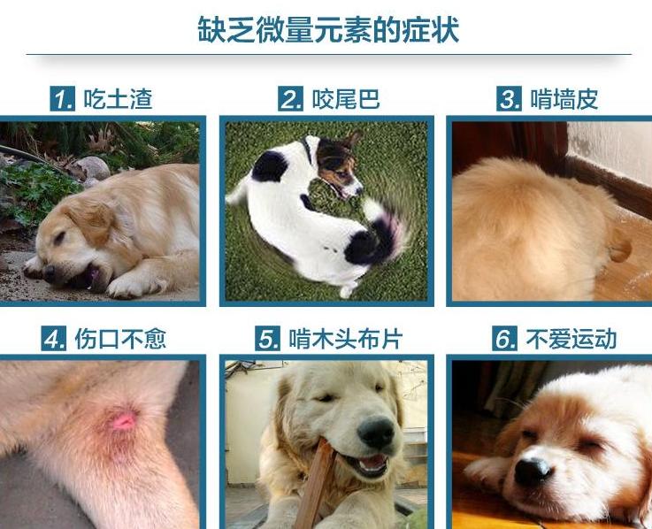 狗狗吃草,不仅是为了助消化,还有这几个原因