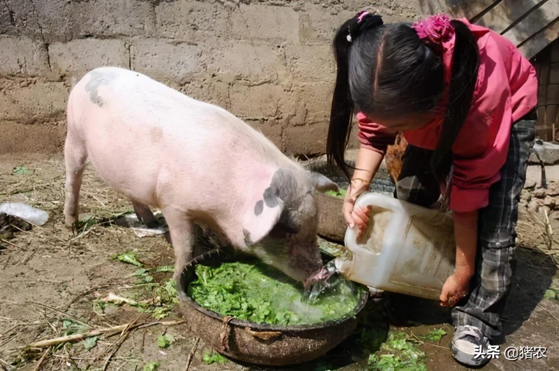 畜牧养殖前沿:液态饲喂应用效果如何?