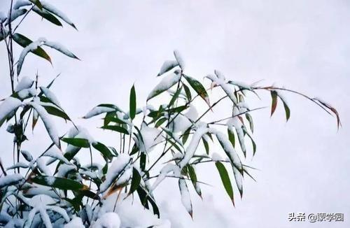 雪落古今诗词中,18首描写雪景的优美古诗词,让冬天美起来