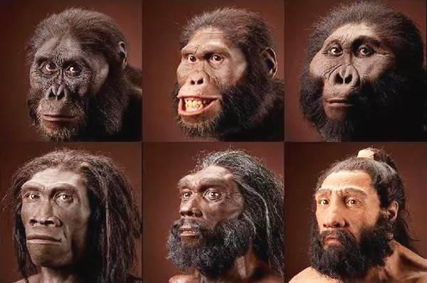 人类进化过程中,曾经存在过17个人种,为何后来只剩下智人?-第2张图片-IT新视野