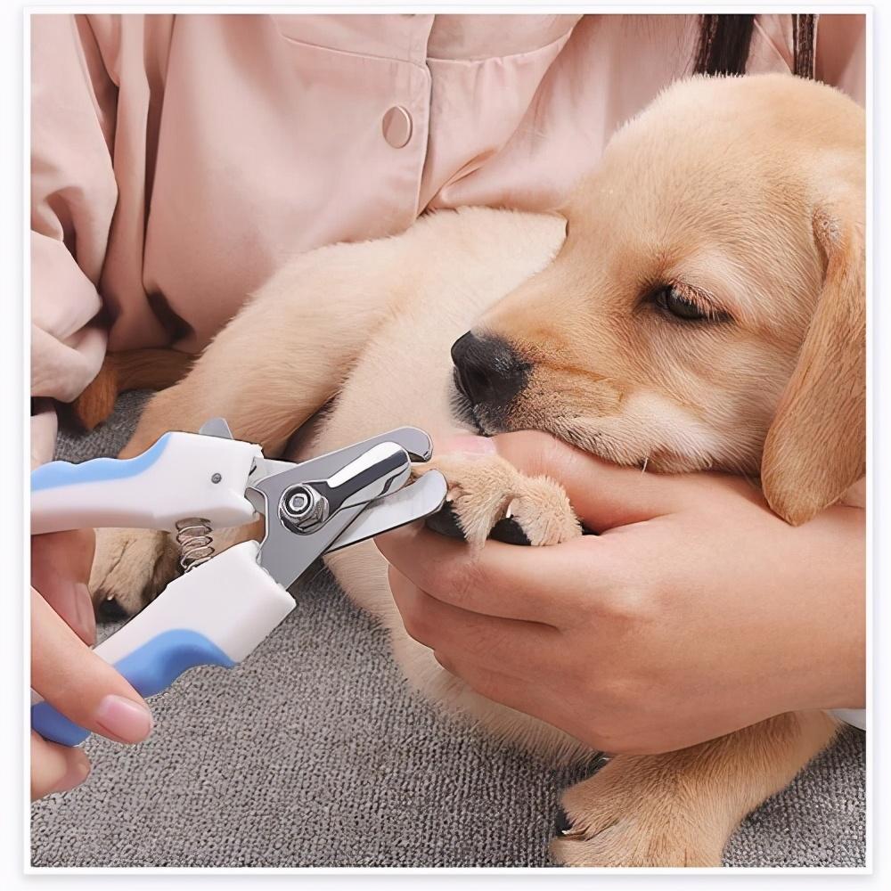 狗狗爪子的几大秘密,一般人都不知道