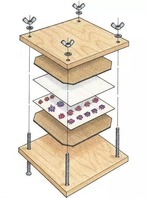 干货丨8款超实用DIY干制花方法,总有一款合你心意