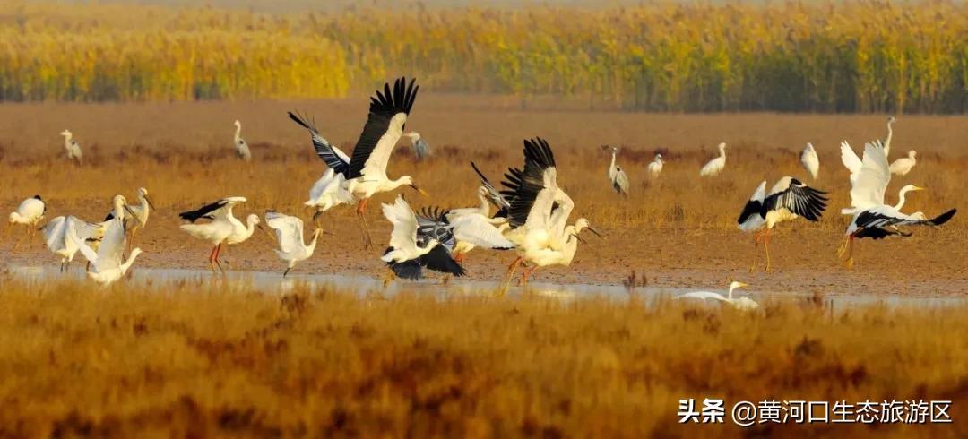 【黄河口生态旅游区】启动慢直播 播放60万
