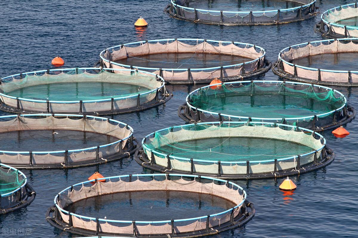 水产饲料对水产养殖的影响